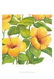 Watercolor Hibiscus IV