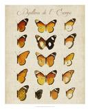 Papillons de L'Europe II