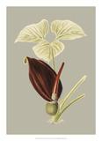 Botanical Cabinet VIII