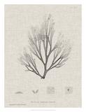 Charcoal & Linen Seaweed III