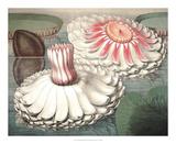 Vintage Water Lily II