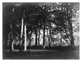 Fontainebleau  1849 - Study of Trees and Pathways
