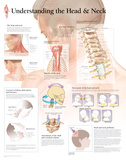 Understanding The Head & Neck Laminated Poster