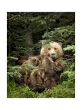 Bears at Play IV