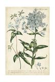 Chambray Botanical II