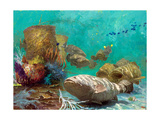 Sabbath Reef Worship  2000