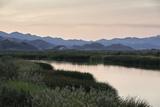 Rio Hardy  a River Tributary in the Colorado River Delta