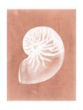 Sealife on Coral V