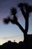 Late Rays of Light at Sunset in Joshua Tree National Park  California