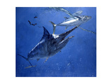Black Marlin  Two Dogtooth Tuna and Needlefish