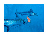 Two Striped Marlin and Iris Nudibranch