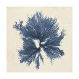 Coastal Seaweed V Reproduction d'art par Vision Studio