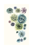 Succulent Cluster I Reproduction d'art par Grace Popp