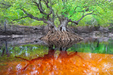 An Ogeechee Tupelo Tree Grows as an Island in the Suwannee River