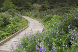 A Walkway Through Point Reyes National Seashore in Marin County  California