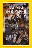 Mother Tiger Carrying Her Cub; Cover of 12-1997 Ng Magazine