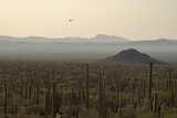 A Border Patrol Helicopter Looking for Illegal Activity in Organ Pipe Cactus National Monument