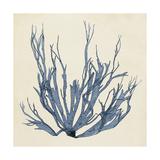 Coastal Seaweed I Reproduction d'art par Vision Studio