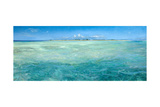 Bones Up with the Tide: a Panoramic Island View of Bonefish Searching for Food in Shallow Water