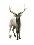 Majestic Wildlife II Reproduction d'art par Grace Popp