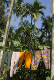 Laundry Dries on a Clothesline Beneath Palm Trees