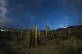 Saguaro National Park During an Approaching Storm and Tucson Lights  Tucson  Arizona