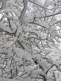 New Snow Covers Branches of an Aspen Tree Near Bozeman  Montana