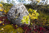 Lush Autumn Colors Dapple Ground Cover in a Tundra Gully