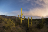 Saguaro National Park with Clouds of an Approaching Storm and Tucson Lights