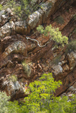 A Tree Grows Sideways Out of a Cliff in Talbot Bay  Western Australia