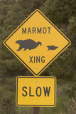 A Marmot Crossing Sign in Great Basin National Park