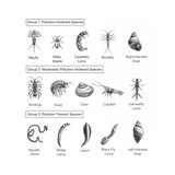 Macroinvertebrates Chart  Pollution Tolerance