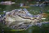 Close Up Portrait of a Crocodilian