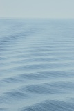 Surface Ripples on the Sea of Cortez