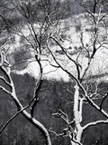 Farmland in the Valley Below  Seen Through Snow-Covered Tree Branches