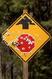 A Stop Sign with Bullet Holes in the Rogue River National Forest