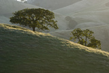 The Grassy Hills of Mount Diablo State Park