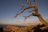 A Dead Tree Looms in Front of the Desert View Watchtower and Surrounding Grand Canyon