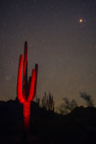 A Night Photo of a Saguaro in Organ Pipe National Monument in the Ajo Mountains  Arizona
