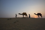 Men Lead Camels over Sand Dunes at the Edge of the Thar Desert  Famous for Camel Rides