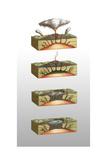 Caldera Formation  Illustration
