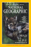 Cover of the March  1995 Issue of National Geographic Magazine