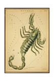 Scorpius Constellation  Zodiac Sign  1825