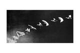 Flying Heron  1886