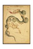 Draco and Ursa Minor Constellations  1825