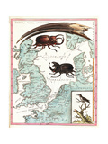 Stag Beetles Crawling Over Map  18th Century