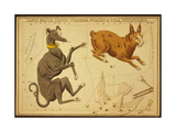 Canis Major and Lepus Constellations  1825