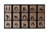 Muybridge Locomotion  Men Wrestling  1881