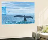 A Humpback Whale Tail Near Paradise Harbor  Antarctica