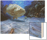 The Great Presence  2001: a Massive Goliath Grouper Cruises its Rocky Habitat in Search of Food